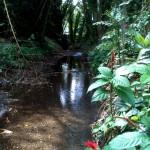 Quebrada Ausubo (10)