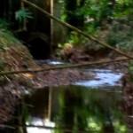 Quebrada Ausubo (11)