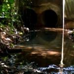 Quebrada Ausubo (13)