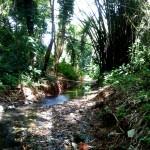 Quebrada Ausubo (15)