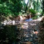 Quebrada Ausubo (16)