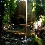 Quebrada Ausubo (18)