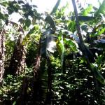Quebrada Ausubo (4)
