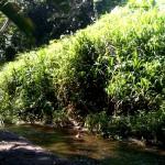 Quebrada Ausubo (5)