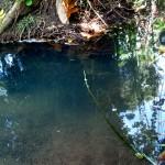 Quebrada Ausubo (6)