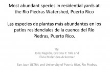 Most abundant species in residential yards at  the Rio Piedras Watershed, Puerto Rico